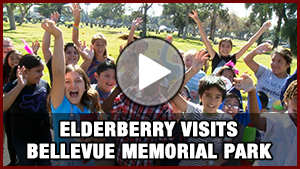 Elderberry Visit Bellevue Video